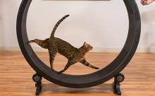 家猫のストレス発散に!にゃんこ用ルームランナーが画期的
