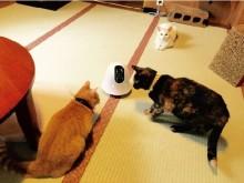 お家の中をパトロールしてお留守番ペットを見守る♡ Pet×IoTな移動式カメラ