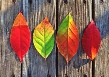 秋の支度は唇から! うっとり唇を作り込む方法