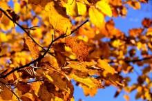 うまくいかない秋の肌。リセット美容で肌の貯水力をUP!