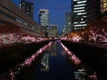 やさしくなれた。目黒川を桜色に染めるイルミネーション