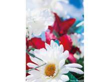 ギフトを彩る!蜷川実花オリジナルカードプレゼント