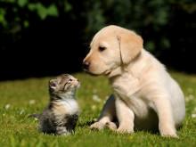 猫っぽい? 犬系? あなたが好きな人の前で見せる顔 #深層心理
