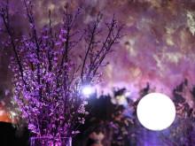日本橋に桜が咲いた。テクノロジーでお花見