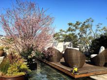 代官山で桜満喫。お花見までもう待てない