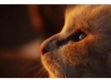 心の琴線にやさしく触れる、猫を愛した作家にまつわる写真展
