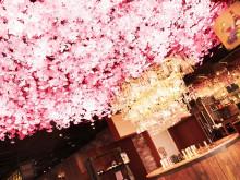 雨の日のお花見は渋谷で。場所取りしなくていいし、寒くもない