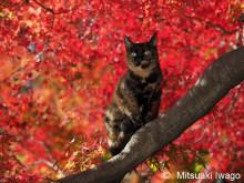 ねこを通して京都を見る!「岩合光昭写真展 ねこの京都」