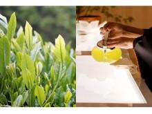5日2日は八芳園で今年の新茶をいち早く味わって!