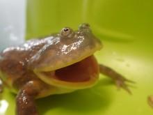 6月6日はカエルの日!サンシャイン水族館でイベント開催