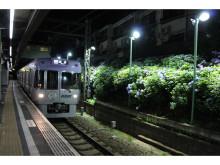 まもなく見ごろ!東松原駅でアジサイのライトアップ開催