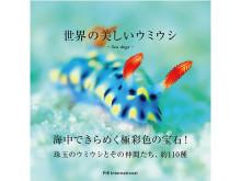 海の宝石!?きらめくカラフルなウミウシの写真集