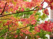 秋はすぐそこ。あなたの9月の運勢は? #深層心理