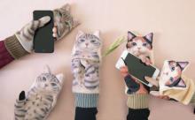 かまってアピールのニャンコにキュン♡かわいすぎるスマホ対応手袋がこの冬登場♪