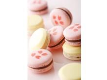"""春限定!""""和""""をイメージした「桜」と「酒」の紅白マカロン"""
