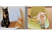 江戸版猫カフェ「江戸ねこ茶屋」が両国に期間限定オープン!