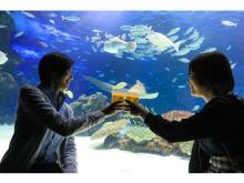 生き物たちを眺めながら乾杯!「水族館ビアガーデン」OPEN