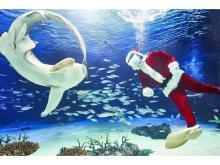 """サンシャイン水族館で""""海のクリスマスパーティー""""開催!"""