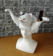 """これが本当の… """"猫かぶり帽""""がSNSで話題、作者に聞く「愛猫ロスが作品の原動力に」"""