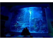 新年は「すみだ水族館」のお正月イベントを満喫しよう!