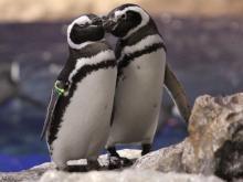 恋のイベントシーズンは水族館でペンギンと盛り上がろう!