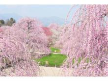 """""""花屋""""が旅をプロデュース!日本有数の梅の名所を巡るツアー"""