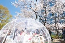 東京ミッドタウンで都会のお花見が開催!ザ・リッツ・カールトン東京×CHANDONのマリアージュもお楽しみ♡