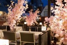 ひと足早い夜桜気分で「こたつ女子会」はいかが♩春限定「桜ガーデンテラス」が赤坂見附にOPEN♡