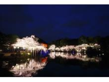 300本の夜桜に囲まれた平安神宮でスペシャルコンサートを開催