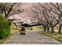 園内に桜1600本!つま恋リゾート彩の郷「つま恋桜まつり」開催