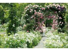 130万本のバラに包まれる!ハウステンボスの「バラ祭」