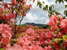 母の日のプレゼントに伊豆大島への日帰り温泉旅行はいかが?