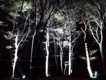 「NOZARU」が期間限定で幻想的な夜のアスレチック「YOZARU」に