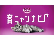 """""""子猫育て""""を音声でサポートするアプリ「育ニャンナビ」登場!"""