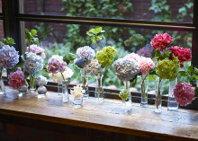 青山フラワーマーケットであじさいのブーケを作ろう♡ティーハウス×ハナキチの6月のテーマは「あじさい」