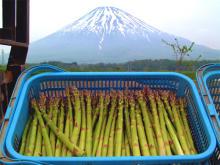 新鮮採れたて!北海道・初夏の食材「アスパラガス」のフェア