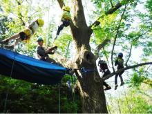 """初心者でも安心!非日常の木登り体験""""ツリーイング""""を楽しもう"""