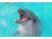 しながわ水族館が「イルカショー&アシカショー」再開!
