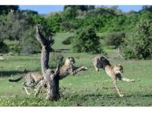 アフリカの大自然を鑑賞!山形豪写真展「SAFARI」開催