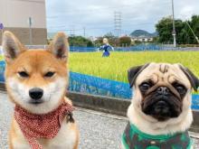 """""""ナウシカ""""の前に佇む犬2匹「早く散歩行こう」…なんとも言えぬ表情がジワると話題に"""