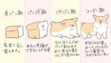"""実はコーギーは食パンに似ている? """"たべものに育てられた犬""""作者に聞く「犬の魅力」"""