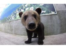 北海道洞爺の温泉旅館に熊牧場とコラボした宿泊プラン登場!