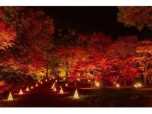 500本のカエデが美しく染まる!「紅葉見ナイト」開催