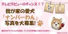 アニメ「織田シナモン信長」のED映像で使用する、愛犬の写真を募集するキャンペーンが実施 【アニメニュース】