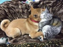 """""""顔を寄せ合う柴犬と猫""""と""""ナウシカの前で並ぶパグと柴犬"""" 仲睦まじい2匹のペットの写真が話題に"""