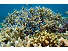 """3月5日はサンゴの日!サンシャイン水族館の""""サンゴイベント""""に出かけてみよう"""