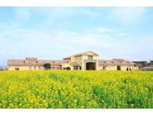 10万本のナノハナがまさに見頃!「菜の花まつり」で「摘み取り体験」開催