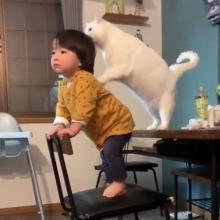 1才の男の子を優しく見守る白猫の姿が660万再生「ジブリの世界」「最高のシッター」