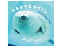 特製シール付き!海遊館で大人気の「まるすぎるアザラシ」が写真集に