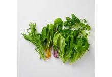 植物工場野菜のみで作られた「おいしさまるごと いろいろサラダ」新発売!